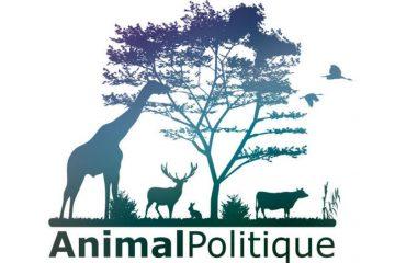 animal-politique-b