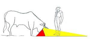 taureau-champ-de-vision-profil