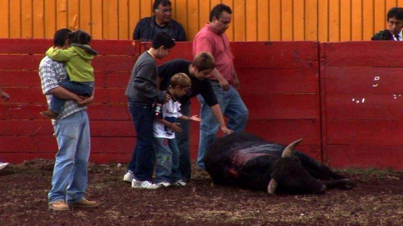 enfants sur taureau mort