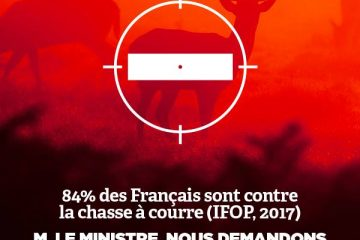 chasse a courre visuel