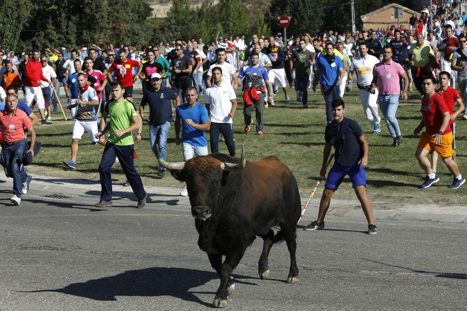 toro de la vega 3